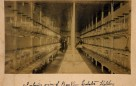 Interior of the Bayview lobster hatchery showing rows of Wilmot jars